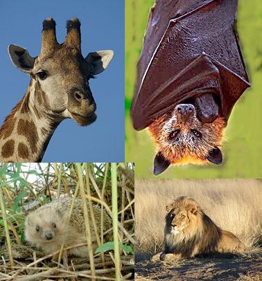 """""""clasificación de los animales por su temperatura"""" """"hibernación""""  """"mecanismos fisiológicos"""""""
