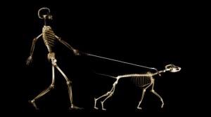Cuantos-huesos-tiene-el-cuerpo-humano-3